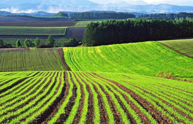выкуп земельных участков сельскохозяйственного назначения
